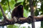 Titi Monkey by Gabby Salazar