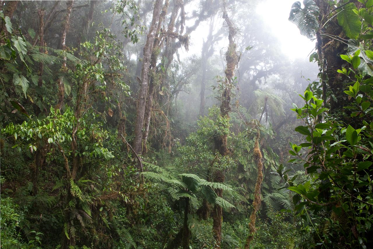 перу джунгли фото охранник