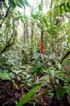 Forest Scene by Gabby Salazar